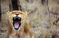 Safari i Sydafrika – viktiga förberedelser